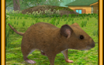 Mouse Simulator Mod APK 2020 for Android – new version