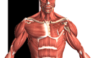 Visual Anatomy 2 Mod APK 2020 for Android – new version